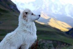 一条白色狗的画象在山背景的  免版税库存照片