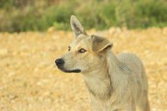 一条白色狗的画象在自然背景的 免版税库存照片