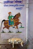 一条白色狗睡觉在一匹登上的马下 免版税库存图片