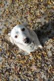 一条白色狗 免版税库存图片