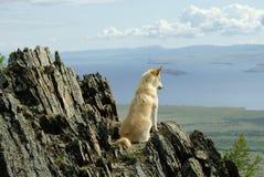 一条白色红色狗看往云彩大浪在山中的 库存图片