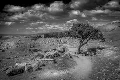 一条石道路的黑白照片 免版税图库摄影