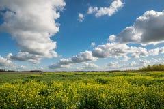 一条积云街道的风景看法在油菜籽的领域的在荷兰乡下 免版税图库摄影