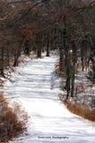 一条积雪的道路在森林 库存照片