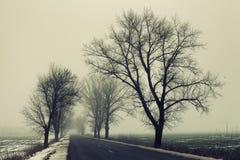 一条空的农村路在一个有雾的冬天早晨 免版税库存照片