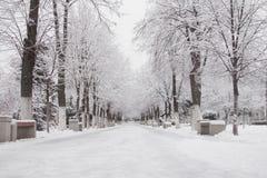 一条空的冬天路在公园 免版税库存照片