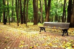 一条空的长凳在森林里 免版税库存图片