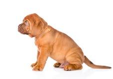 一条红葡萄酒小狗的画象在外形的 查出在白色 库存图片