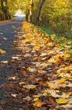 一条美丽如画的秋天高速公路,与黄色叶子的树在路 库存照片