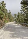 一条美丽如画,农村路在一个云杉的森林里 免版税库存图片