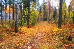 一条美丽如画的道路在秋天森林里 库存图片