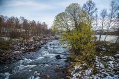 一条美丽的河在秋天的流经挪威森林 免版税库存照片
