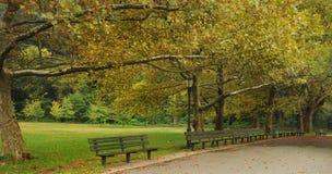 一条美丽的沿途有树的公园道路在纽约城 库存图片