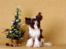一条美丽的狗坐与圣诞树 免版税库存照片