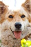 一条美丽的狗的纵向 库存照片