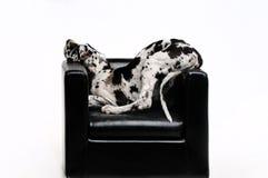 一条美丽的狗的画象在白色背景的 免版税库存照片