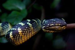 一条美丽的蛇的特写镜头 免版税库存照片