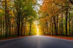 一条美丽的路通过在秋天期间的一个森林 免版税库存图片