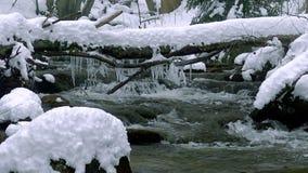一条美丽的透明的小河在与雪的冬天流经森林 股票视频
