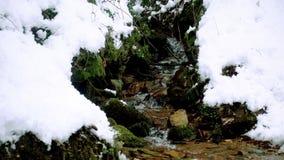 一条美丽的透明的小河在与雪的冬天流经森林 股票录像