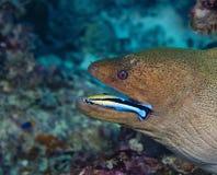 一条美妙的鱼水下在马尔代夫,好象它吃了, 库存照片