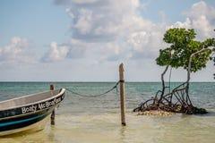 一条老小船被栓对岗位在美洲红树树旁边 免版税图库摄影