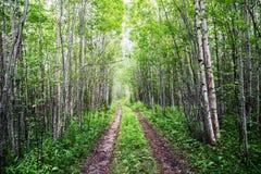 一条老森林公路 免版税图库摄影