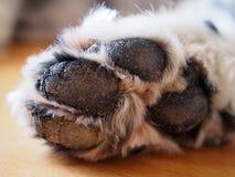 一条老狗的爪子 免版税库存图片
