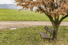 一条老长凳在树下 免版税库存图片