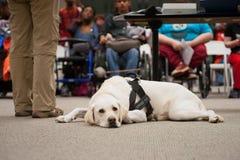 一条耐心服务狗 免版税图库摄影