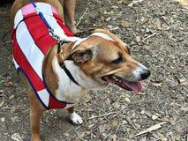 一条聪明的狗 免版税库存照片