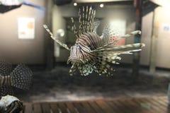 一条脾气坏的鱼 免版税库存照片
