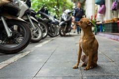 一条街道狗在河内,越南 图库摄影