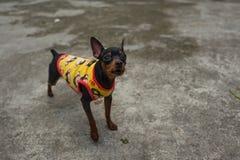 一条街道狗在河内,越南 免版税库存照片