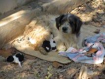 一条街道狗的可爱的特写镜头与她的小狗的 免版税库存照片