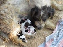一条街道狗的可爱的特写镜头与她的小狗的 库存图片