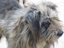 一条街道狗的可爱的特写镜头在泰国 免版税库存图片