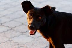 一条街道狗的画象与一张开放嘴和舌头的 一条狗的照片与美好的景气的 无家可归的狗 免版税库存图片