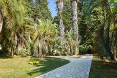 一条被铺的人行道在棕榈树中的一个亚热带公园 库存图片