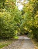 一条路在公园 库存图片