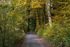 一条路在带领通过有黄色叶子的一个森林的秋天 免版税库存照片