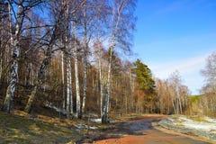 一条路在春天森林。 免版税库存图片