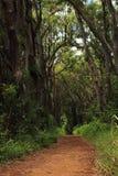 一条路在森林里 免版税库存照片