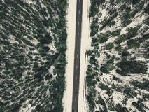 一条路的寄生虫摄影在森林之间的在冬天-葡萄酒lo 图库摄影