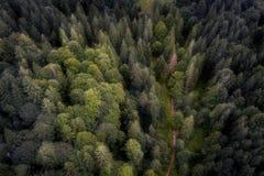 一条路的空中射击在罗马尼亚森林里 库存照片