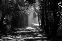 一条路的第一人景色有切开通过薄雾和创造在的阳光的美好的阴影纹理 免版税库存图片