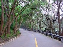 一条路通过树两行  库存图片
