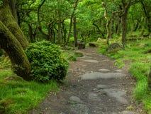 一条路通过森林 库存图片