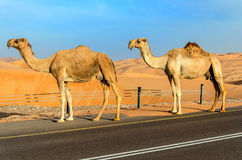 一条路通过沙漠沙丘 免版税库存照片