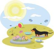 一条达克斯猎犬狗的抽象例证与玩具的在一个草甸在一个晴天 图库摄影